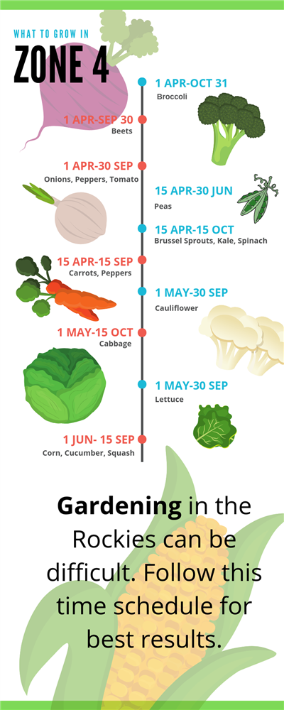 Infographic on Zone 4 growing seasons